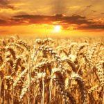 パンや米をたべない糖質制限で治した糖尿病